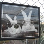 Bunnies with sunnies!